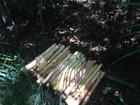 Homem é multado em mais de R$ 250 mil por extrair palmito em parque