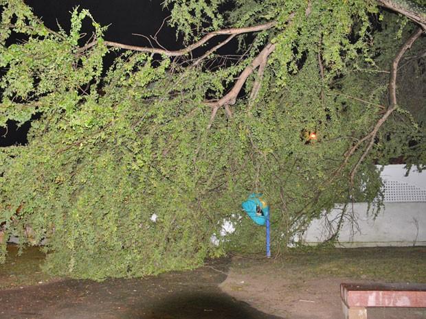 Chuva e vento fizeram a árvore cair por cima do muro da Unidade de Saúde do Geisel (Foto: Walter Paparazzo/G1)
