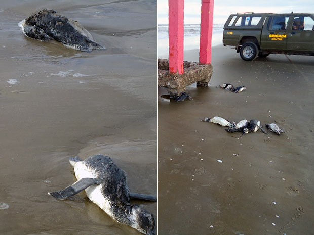 Pinguins encontrados mortos no Litoral Norte do RS (Foto: Divulgação/Brigada Militar)