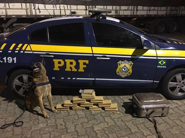 """Cão farejador """"K9 Apolo"""" encontra droga escondida em mala que ia para o Espito Santo. (Foto: Divulgação/PRF)"""