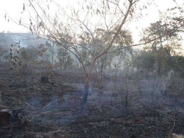 Incêndio que atingiu o bairro Macuco no domingo (27) (Foto: Assessoria de Timóteo)