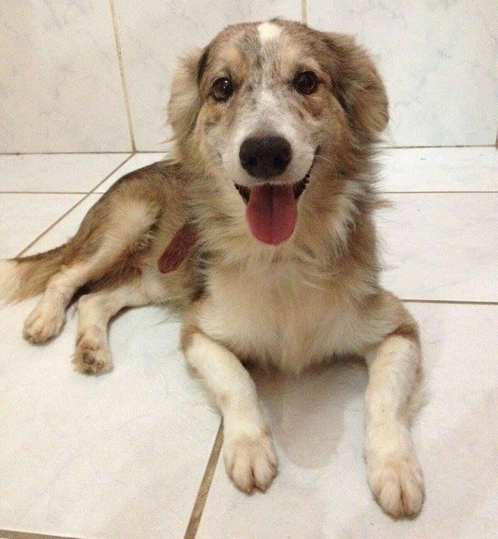 Um dos cachorros que pode ser adotado no próximo sábado (19) (Foto: Divulgação)