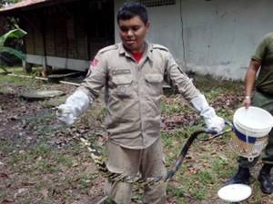 Cobra Caninana Belém Icoaraci Pará (Foto: Divulgação/Corpo de Bombeiros)