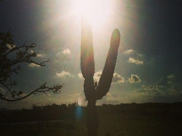 Cacto típico do nordeste sobrevive à seca na Agreste Central de Sergipe  (Foto: Tássio Andrade/G1)