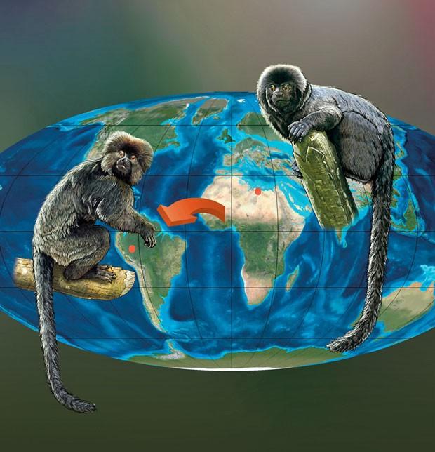 Na ilustração acima, da esquerda para a direita, a tentativa de reconstrução do primata Perupithecus ucayalensis e do exemplar africano Talahpithecus parvus, que vivia na Líbia no período Eoceno. As imagens mostram fortes semelhanças entre os animais, o que dá suporte à teoria de dispersão da África para a América do Sul. (Foto: Divulgação/Ron Blakey/Nature)