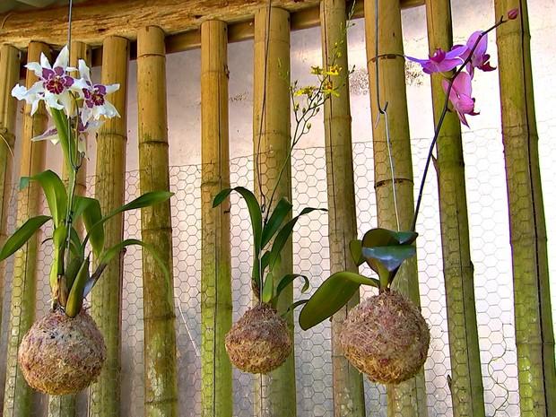 Paixão pelas plantas motiva o comércio da empresária  (Foto: Reprodução/ TV TEM)
