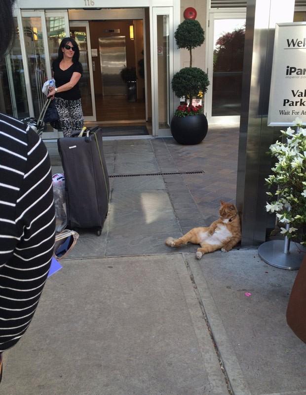 Gato fez sucesso na web ao ser fotografado na 'maior preguiça' em hotel (Foto: Reprodução/Reddit/TheLoudestMeows)