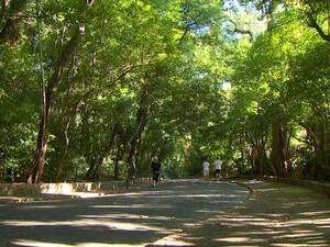 Bosque dos Jequitibás, em Campinas (Foto: Reprodução EPTV)
