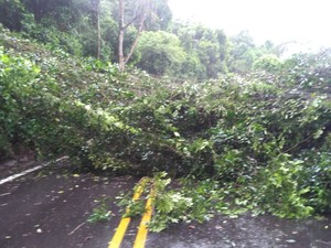 Queda de árvore bloqueou duas faixas da Estrada Parque, em Itu (Foto: João Vitor Filho/Arquivo pessoal)