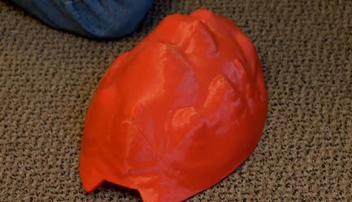 Com o tempo, casco original de Cleópatra vai se recuperar e a prótese não será mais necessária  (Foto: Reprodução/Youtube)