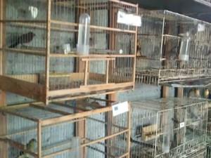 Pássaros estavam em gaiolas sujas e não havia água e nem comida necessária para todos os animais (Foto: Divulgação/Polícia Militar Ambiental)