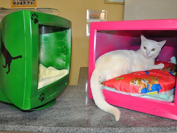 Sucatas de monitores são alternativas sustentável para cama de gato no CCZ de Americana (Foto: Divulgação/Prefeitura de Americana)