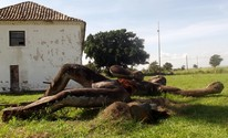 Antiga estátua do índio Goytacá de Campos, RJ, está abandonada  (Priscilla Alves/ G1)