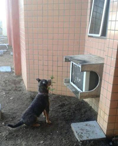 Cachorro fica 4 dias à espera de dono internado em hospital no Piauí (Foto: Francinete Oliveira)