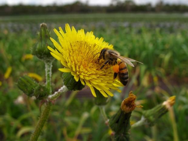 Diminuição de abelhas e outros polinizadores ameaça agricultura (Foto: Mike Blake/Reuters)