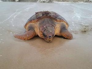 Tartaruga de 120 kg foi encontrada em praia de Nova Viçosa (Foto: Lusemira Bezerra/Arquivo pessoal)