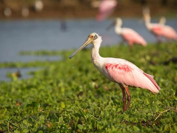 Exposição de fotos sobre fauna do Tanquã vai abrir neste sábado (Foto: Luciano Monferrari)