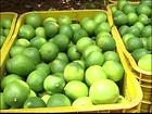 Produtores de limão de Itajobi, em SP, recuperam as perdas de 2012