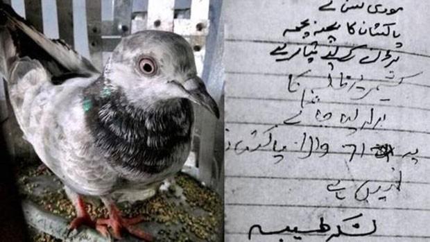 A curiosa história das pombas presas na Índia sob acusação de serem 'espiãs' (Foto: BBC/PTI)