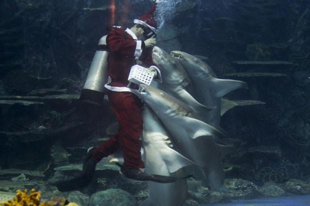 Um mergulhador vestido de Papai Noel foi cercado por tubarões ao alimentar os peixes em um aquário em um parque em Manila, nas Filipinas. (Foto: Romeo Ranoco/Reuters)