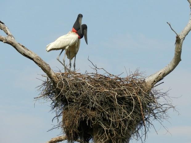 Vijante fez registro por onde passou, incluindo a fauna do Pantanal (Foto: Caio Bezerra/Arquivo pessoal)