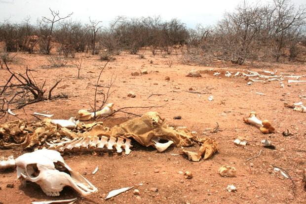 Com a morte do gado, produção de leite diminui no interior do RN (Foto: Rafael Barbosa/G1)