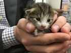 Funcionário salva gato da morte em usina de reciclagem nos EUA