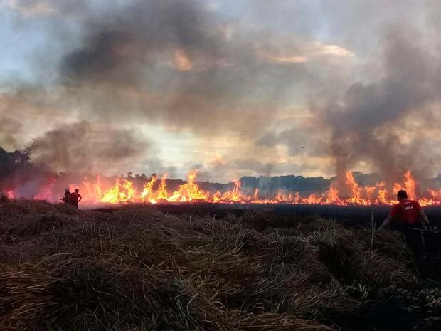 Incêndio atinge área de proteção ambiental no Litoral Norte da Bahia (Foto: Divulgação/Corpo de Bombeiros Militar)