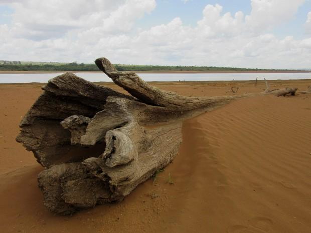 Tronco de árvore fica exposto em terreno arenoso após baixa do volume de água do reservatório do Descoberto nesta quarta-feira (9) (Foto: Alexandre Bastos/G1)