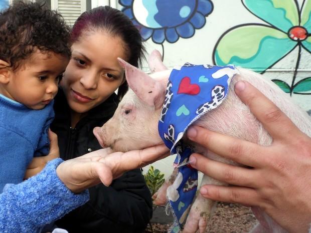 Menino recebe visita de porquinho no hospital em São Leopoldo, RS (Foto: Tatiane Brandão/Divulgação/Prefeitura de São Leopoldo)
