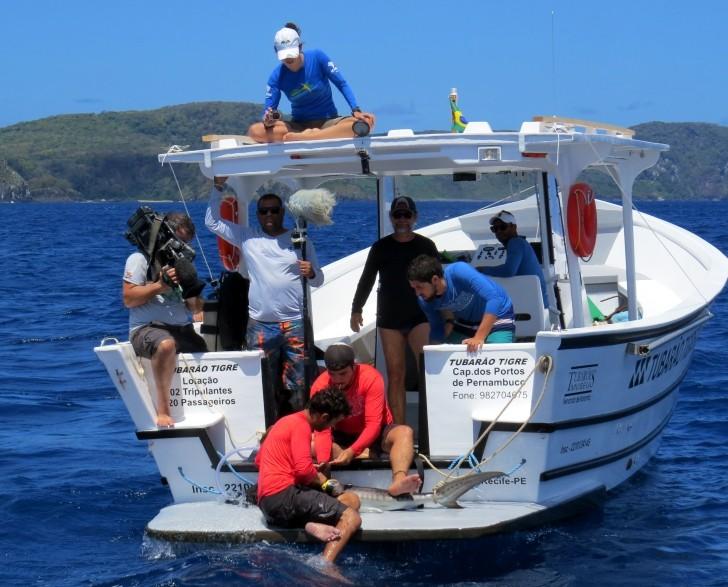Fracisco José pequisa tubarão