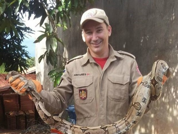 Cobra tinha mais de dois metros de comprimento (Foto: Alerta Rolim/Reprodução)