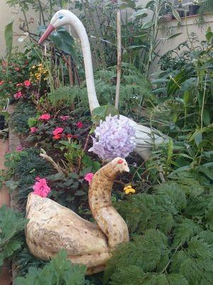 Batata em formato de pato passou a enfeitar o jardim (Foto: Renata Marconi / G1)