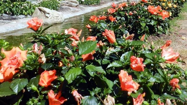 De onde vêm as flores que garantem o presente no 'Dia das Mães' (Foto: Reprodução / EPTV)
