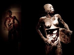Mostra expõe corpos reais doados à ciência (Foto: Divulgação)