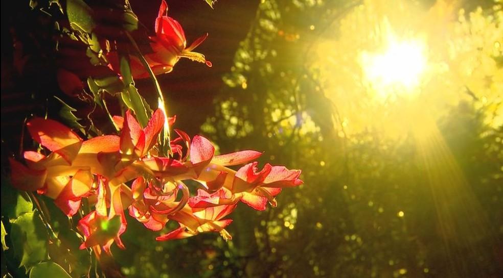 Quintal de zootecnista de Marília se transformou em um jardim suspenso por conta das flores de maio (Foto: Reprodução/TV TEM)
