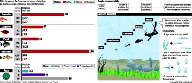 Relatório mostra presença de metais nos peixes e crustáceos (Foto: Arte/ A Gazeta)