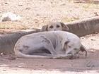 Protetores de animais cobram construção de canil em Redenção, PA