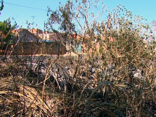 Corpo de Bombeiros registrou quatro focos de incêndio em Araraquara (Foto: Wilson Aiello/EPTV)