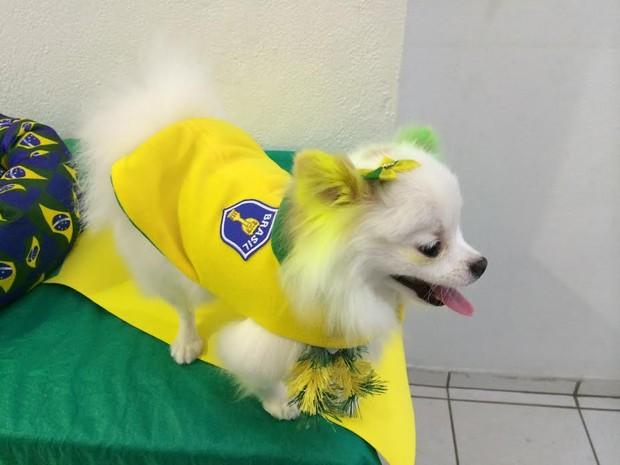 pet shop copa cachorro 3 (Foto: Guilherme Pontes/G1)