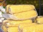 Preço dos ingredientes de comidas juninas sobe 20% no oeste da Bahia