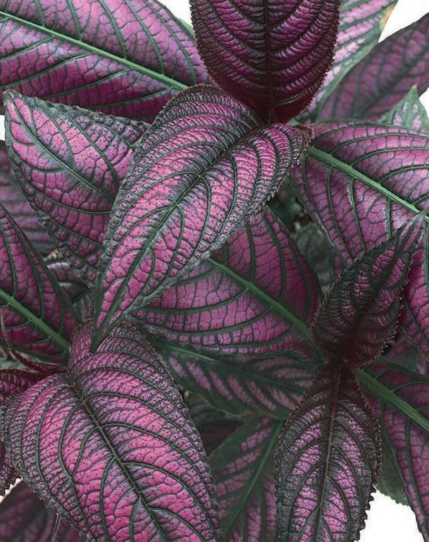 paisagismo-plantas-que-não-são-verdes (Foto: Divulgação)
