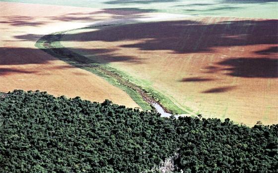 Áreas desvastada no Mato Grosso. O estado foi o que mais derrubou a floresta entre 2014 e 2015 (Foto: Instituto Centro de Vida)
