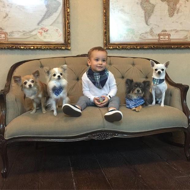 Ana Hickmann posta foto do filho com os cachorrinhos (Foto: Reprodução/Instagram)