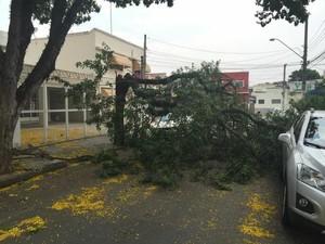 Árvore caída São José dos Campos (Foto: Rodrigo Correia / Divulgação)