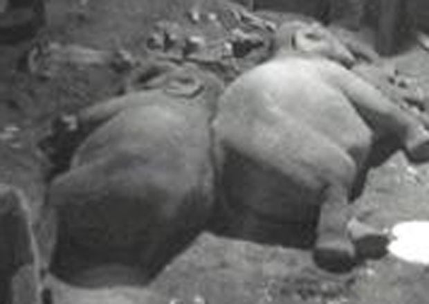 Zoológico monitora sono dos elefantes. (Foto: Reprodução/Chester Zoo)