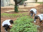 Escolas desenvolvem projetos de hortas com alunos no Oeste Paulista