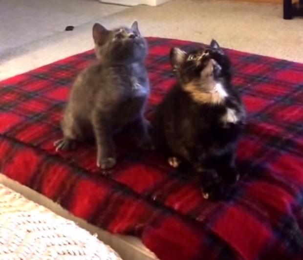 Gatos foram filmados dançando enquanto eram distraídos por americano em vídeo (Foto: Reprodução/YouTube/Katz)