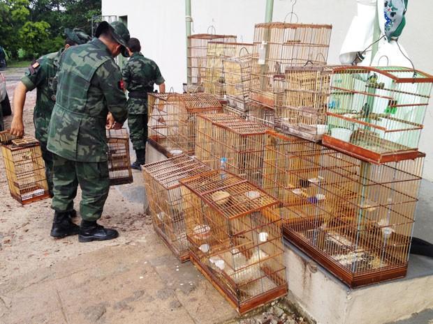 PM Ambiental resgata cerca de 30 aves na Grande João Pessoa, Paraíba (Foto: Walter Paparazzo/G1 PB)