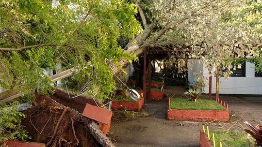 Ventania causa estragos na Região Central do Rio Grande do Sul